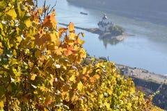 Cidade de Kaub com folhas da uva Fotos de Stock Royalty Free