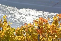 Cidade de Kaub com folhas da uva Foto de Stock