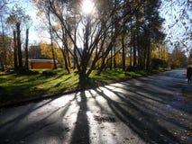 A cidade de Sosnovy Bor na região de Leninegrado em Rússia outono 2018 da aleia da manhã foto de stock