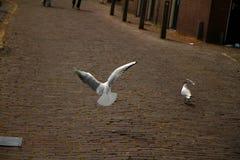 Cidade de Volendam Fotografia de Stock Royalty Free