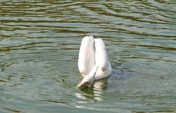 Cidade do beira-mar da região de Berdyansk Zaporozhye Os pássaros e os animais exóticos do jardim zoológico local descansam pacif Fotos de Stock Royalty Free