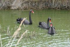 Cidade do beira-mar da região de Berdyansk Zaporozhye Os pássaros e os animais exóticos do jardim zoológico local descansam pacif Imagens de Stock