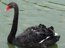 Cidade do beira-mar da região de Berdyansk Zaporozhye Os pássaros e os animais exóticos do jardim zoológico local descansam pacif Foto de Stock