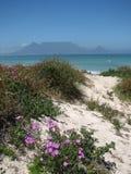 Cidade do cabo da montanha da tabela da silhueta Imagem de Stock Royalty Free