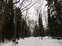 A cidade do parque da cidade de Pavlovsk fotos de stock royalty free