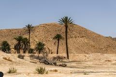 Cidade dos oásis de Tunísia Imagens de Stock Royalty Free