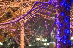 A cidade está preparando-se pelo ano novo - festões das luzes na neve e nos ramos imagem de stock