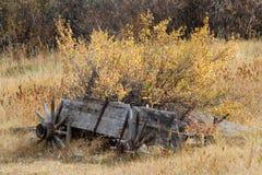 Cidade fantasma de Ashcroft, Colorado imagens de stock