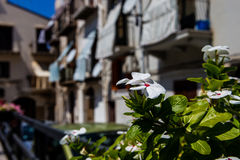 Cidade histórica de Cefalu, Sicília Foto de Stock Royalty Free