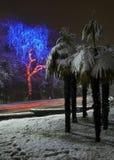 Cidade na noite luzes da festão palmeira no Imagens de Stock Royalty Free