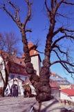 Cidade superior de Tallinn e uma árvore velha na plataforma da visão, Tallinn, Estônia Imagens de Stock Royalty Free
