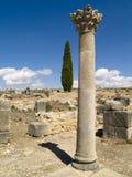Cidade velha romana de Volubilis, Marrocos Fotos de Stock Royalty Free