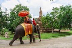 A cidade velha sightseeing do elefante do straddle popular com turistas foto de stock royalty free