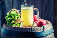 Cider beer with apples, wheat and hops Stock Photos