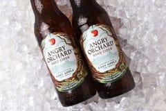 Cider van Apple van de Anrgyboomgaard de Gemakkelijke stock foto's