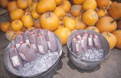 Cidre d'Apple et potirons à vendre, Vermont Photo libre de droits