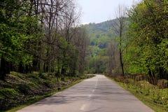 Cień, drzewa, drewno, droga, zieleń, Obrazy Stock