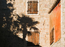 Cień drzewko palmowe na starej kamiennej ścianie Zdjęcie Royalty Free