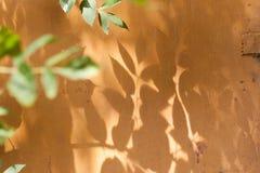 Cień liście na ścianie Fotografia Royalty Free