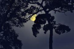 Cień stary duży drzewo w księżyc w pełni nocy Obrazy Stock