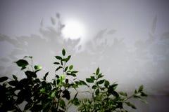 Cień zieleń opuszcza na białym suficie Uczucie świeżość i lekkość minimalista zdjęcie royalty free