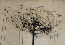 Cień drzewo Fotografia Stock