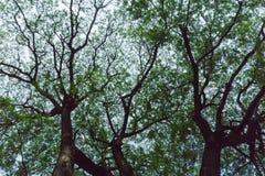 Cień drzewo na niebie Zdjęcie Royalty Free