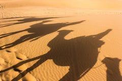 Cień w Sahara Zdjęcia Stock