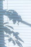 Ciechi di finestra immagini stock libere da diritti