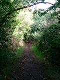 Ścieżka w Lesie Zdjęcia Stock