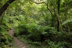 Ścieżka w zielenistym lesie i bujny Obraz Stock