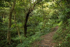 Ścieżka w zielenistym lesie i bujny Fotografia Royalty Free