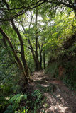 Ścieżka w zielenistym lesie i bujny Obrazy Royalty Free
