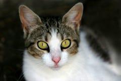 ciekawa kotku Obraz Royalty Free