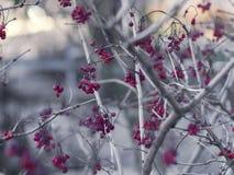 Ciekawa niezwykła roślina w ogródzie obrazy royalty free