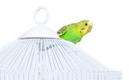 Ciekawa papuga Zdjęcia Royalty Free