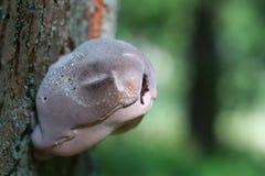 Ciekawa pieczarka na drzewie Obraz Royalty Free