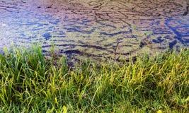 Ciekawa tekstury bagna woda zdjęcie royalty free