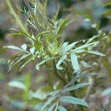 Ciekawa zielona roślina Obrazy Royalty Free