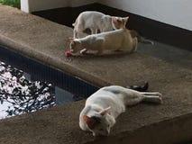 ciekawe kociaki Zdjęcia Royalty Free