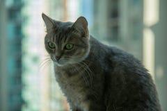 Ciekawej kota portreta zieleni oczu tła piękny zbliżenie Obrazy Royalty Free