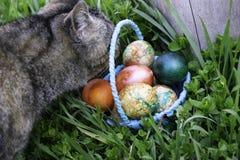 Ciekawie szary kot stoi na zielonej trawie blisko fiszorka obwąchuje błękitnego kosz z Wielkanocnymi jajkami obraz stock