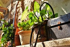 Ciekawość w akrze, Akko, inicjują jako kwiatów garnki zewnętrzny projekt i dekoracja i buty, torebki, w Izrael obraz stock