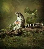 Ciekawski lemur obrazy stock