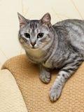 Ciekawy bawić się kot, kot bawić się, śmieszny szalony kot, domowy młody kot, młody bawić się kot w ładnym naturalnym tle Obrazy Royalty Free