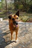 Ciekawy brązu pies w ogródzie Zdjęcie Royalty Free
