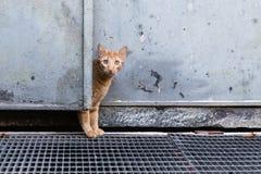 Ciekawy czerwony kot za drzwi fotografia stock