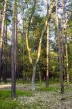 Ciekawy drzewo Zdjęcie Royalty Free