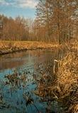 Ciekawy europejski wiosna krajobraz, rzeka, las, łąka Obraz Stock