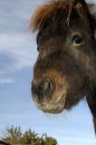ciekawy konia Obrazy Royalty Free